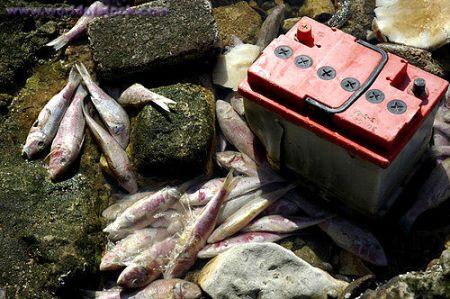 pesci inquinati